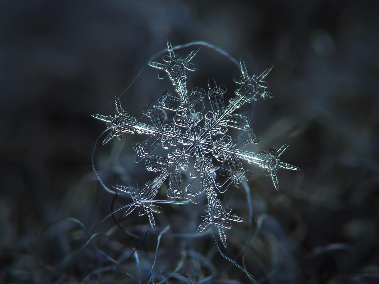 [Fotografía] Copos de nieve, un espectáculo fractal de Alexey Kljatov