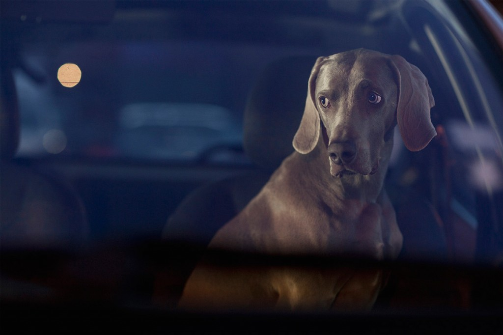 Silence-of-the-dogs-Martin-Usborne-slider