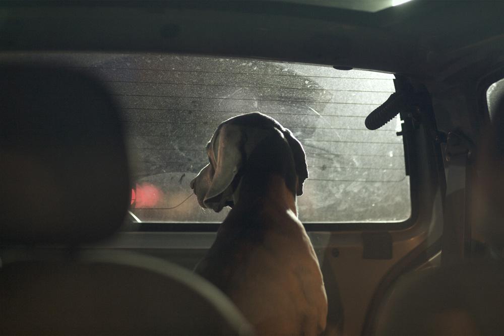 Martin Usborne retrata el miedo y la soledad de los perros