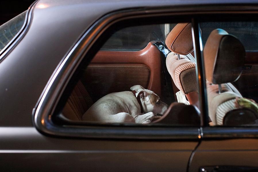 martin-usborne-dogs-in-cars-01