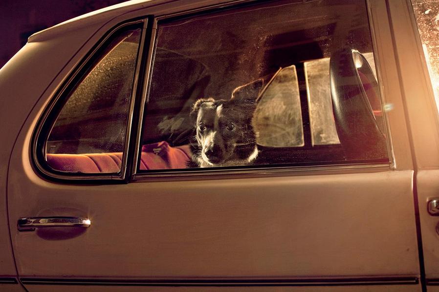 martin-usborne-dogs-in-cars-02