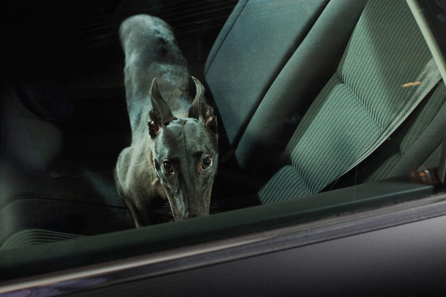 martin-usborne-dogs-in-cars-03