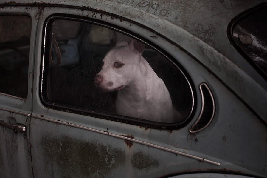 martin-usborne-dogs-in-cars-05