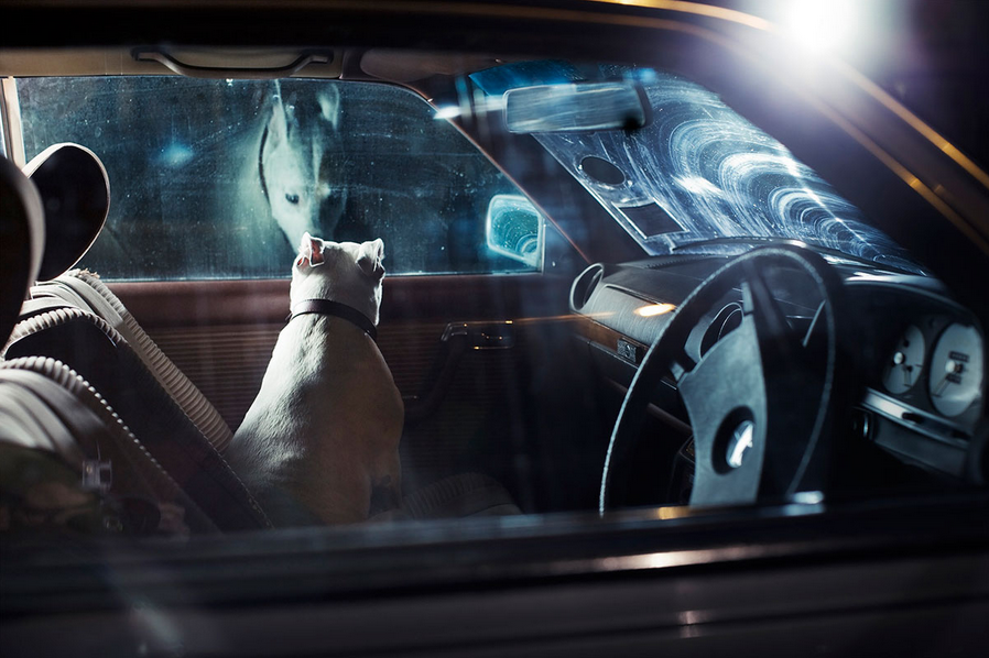 martin-usborne-dogs-in-cars-06