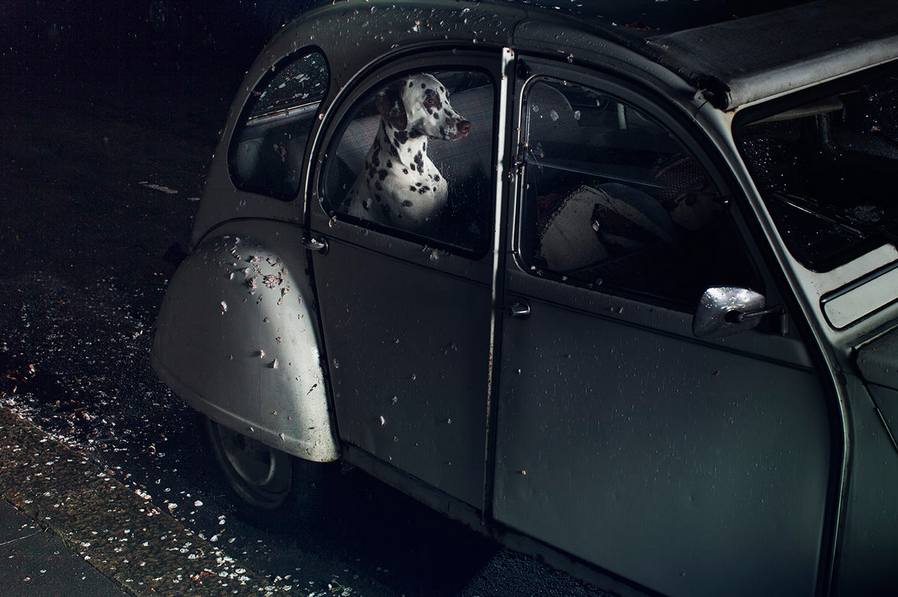 martin-usborne-dogs-in-cars-07