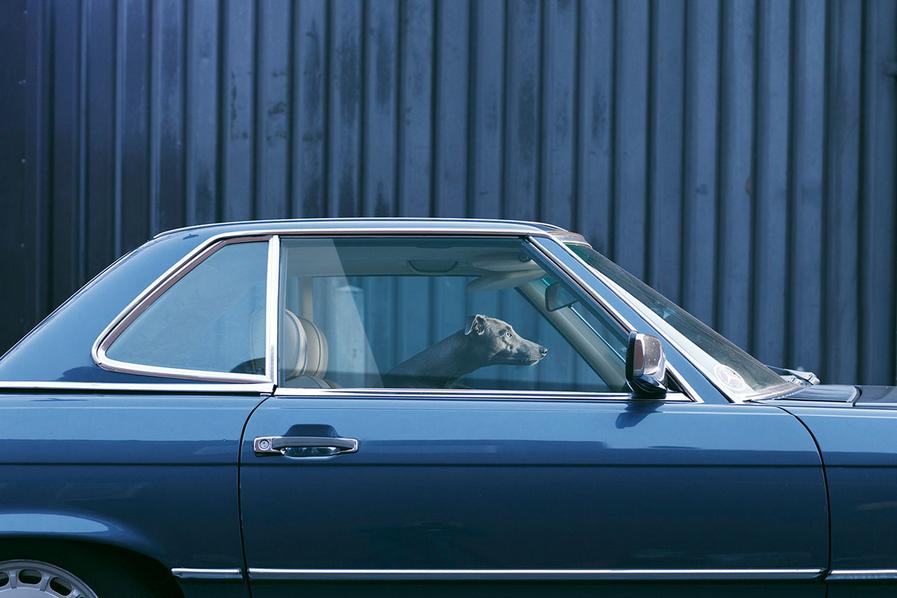 martin-usborne-dogs-in-cars-08