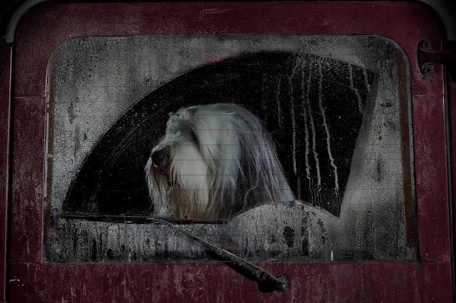 martin-usborne-dogs-in-cars-11