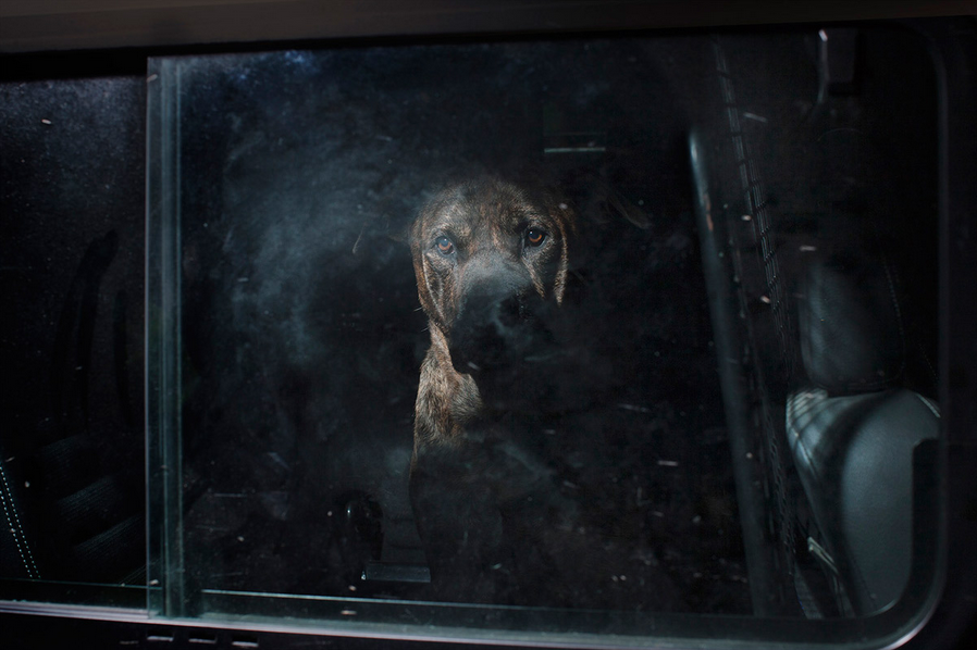 martin-usborne-dogs-in-cars-12