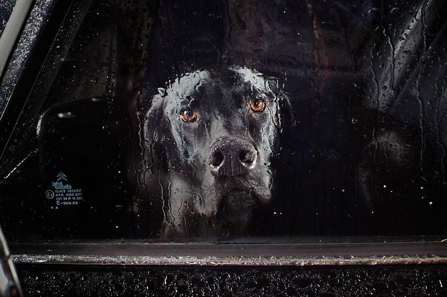 martin-usborne-dogs-in-cars-13