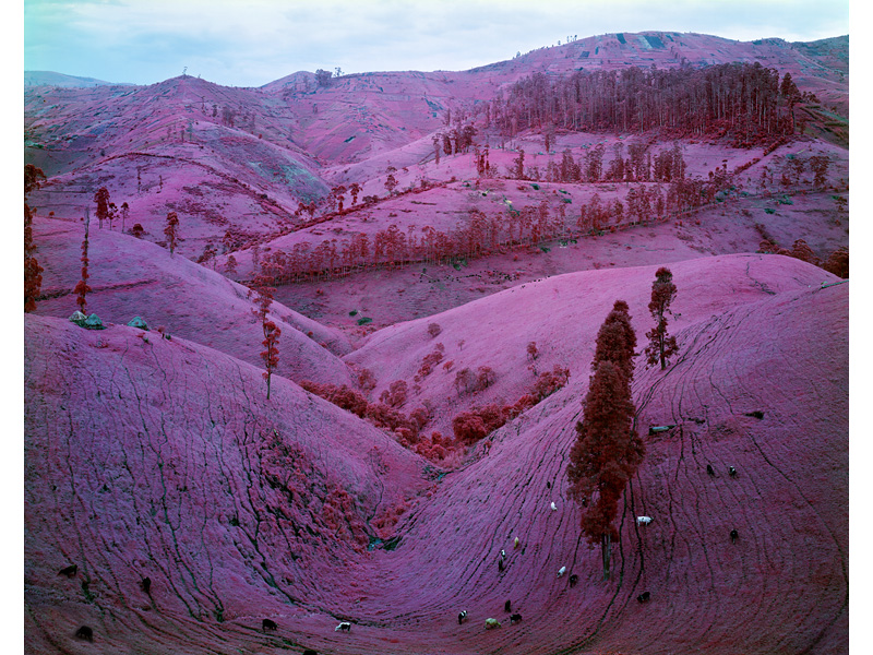 richard-mosse-pelicula-infrarroja-fotografía-guerra-documental-18