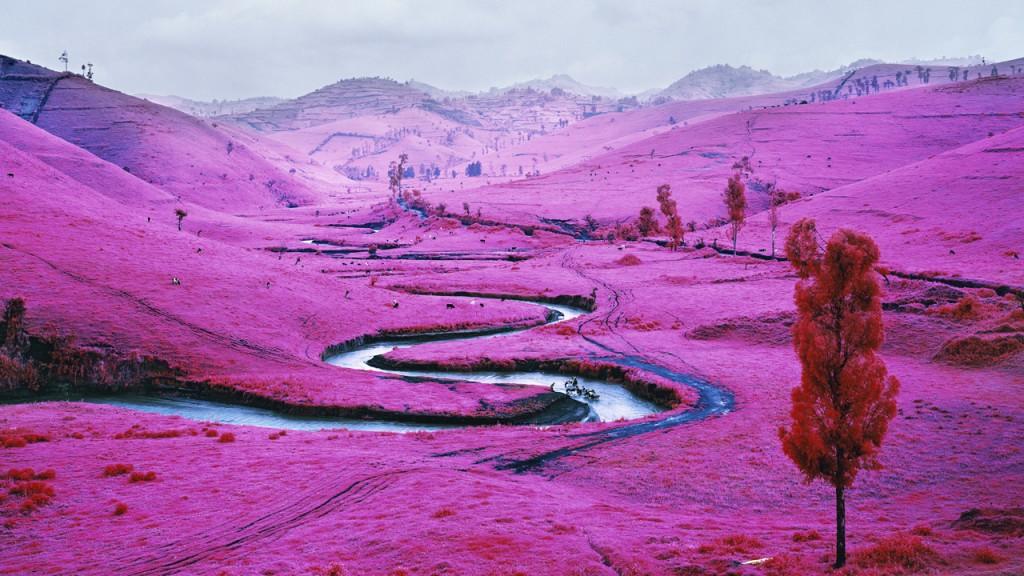 richard-mosse-pelicula-infrarroja-fotografía-guerra-documental-2