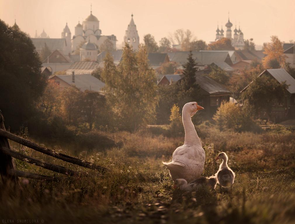 Fotografía - Elena Shumilova 6
