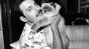 10 canciones protagonizadas por un felino